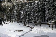 Snowfall at Dal Lake near McLeodganj, Dharamshala, January 2012. Photo by Ashwini Bhatia