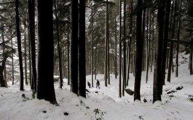 Snowfall in forest near McLeodganj, Dharamshala, January 2012. Photo by Ashwini Bhatia