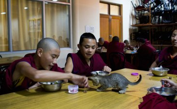 Novice monks play with a kitten while eating at Kirti Monastery, Dharamshala. Photo by Ashwini Bhatia